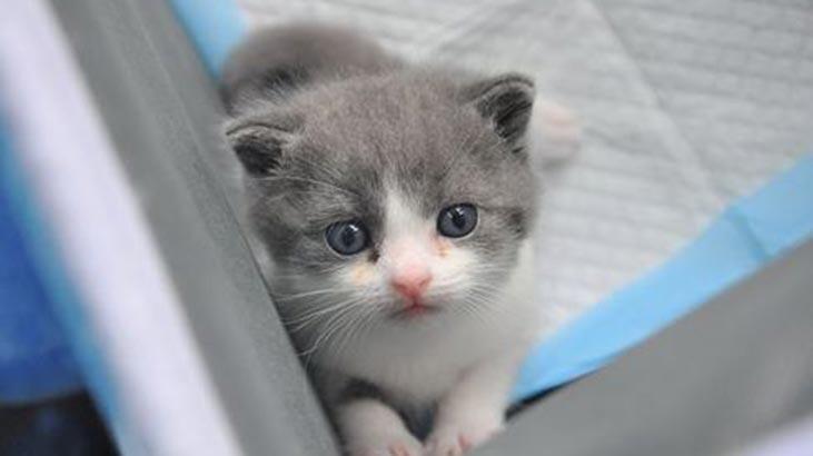 sevimli kedi 16